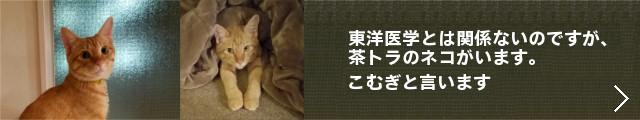 ★完成 640×120:こむぎ+→